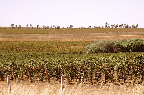 The wineries of South Australia